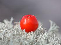 Rowan berries on a blanket of moss 1 von mary-berg