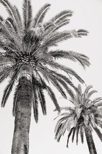 Riviera by Magda Lates
