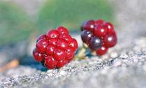 Blackberry von mary-berg