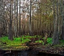 Swamp14