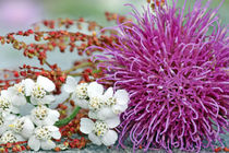 Thistle and little white flowers with red grass von mary-berg