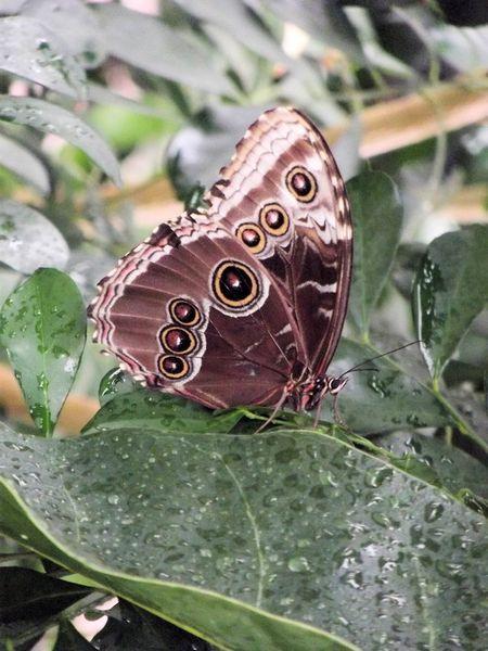 Vlinders-028