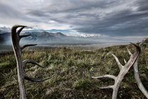 Antlers in Alaska by morten larsen