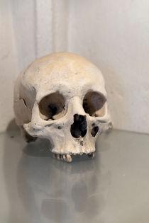 Skull von morten larsen