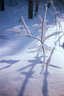 Shadows on snow from branches macro by Roman Popov