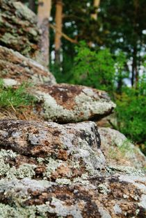 Fungus and moss on stone by Roman Popov