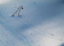 Shadow on snow from a burdock bush von Roman Popov