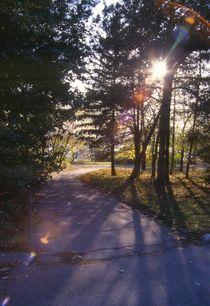 Color patches of light from sunshine against park von Roman Popov
