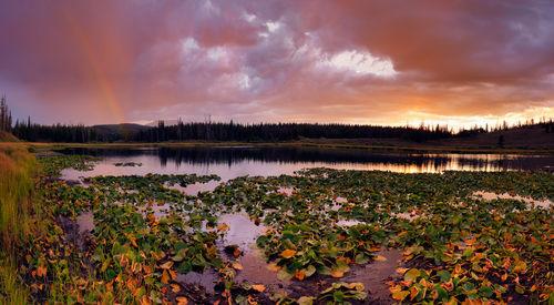 Dt1752lily-lake
