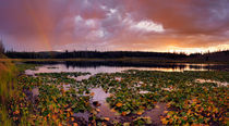 Lily Lake by Leland Howard