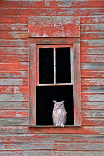 Owl Window von Leland Howard