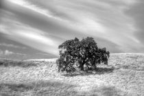Oak Tree On A Hill von agrofilms