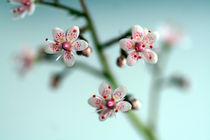Polka dot blossoms von steflei