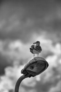 Gull on a Lamp von Nigel Jones