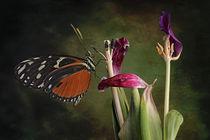 Blumen-verwelkt-6219-butterfly-3
