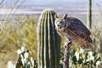 Great Horned Owl Hunting von Kathleen Bishop
