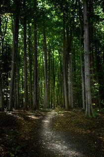 Waldweg von papadoxx-fotografie