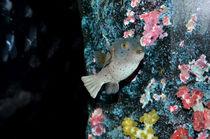 Meerestiere von Cornelia Guder