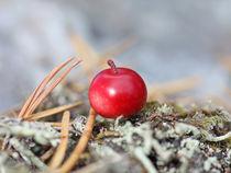 Cowberry von mary-berg