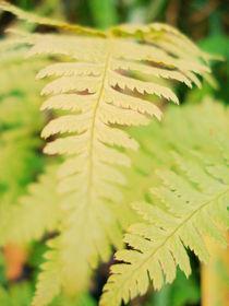 Green Leaf by magicemilia