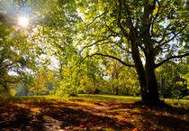 im Herbstlicht by kibo