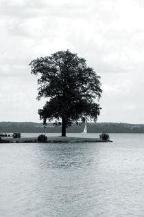 Der Baum von Bastian  Kienitz