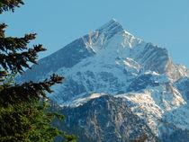 Alpspitze vor Frühlingsgrün von laptoplederhose