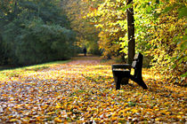 Parkbench with golden leaves by steflei