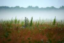foggy meadow von steflei