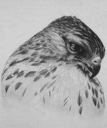Hawk Portrait von Aubrey Campbell