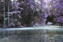 der Teich im Wald by lorenzo-fp
