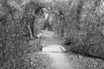 'Swamp Bridge' by Dan Richards