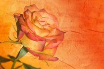 Rose orange von Christine Bässler
