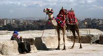 Kairo und Kamel von Theresia Ori