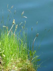 Gras am See von Corinna Schumann