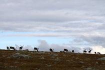 Lappland 29 von Karina Baumgart