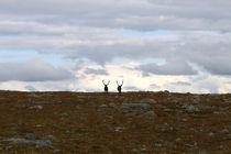 Lappland 28 von Karina Baumgart