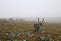 Lappland 26 von Karina Baumgart
