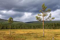 Lappland 23 von Karina Baumgart