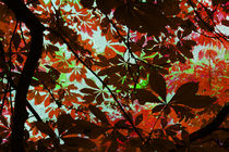 Autumn Leaf Abstract von David Pringle