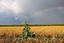 Land unterm Regenbogen - Land under the rainbow von ropo13