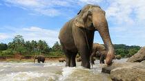 Elephant Sri Lanka von with-your-eyes