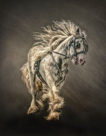 The Gypsy Cob by Brian Tarr
