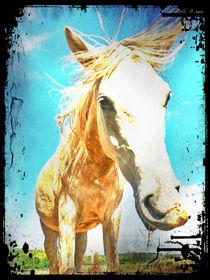 Pferd554