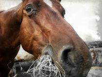 American Quarter Horse von sandra zuerlein