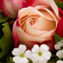 Rose von Björn Wortmann