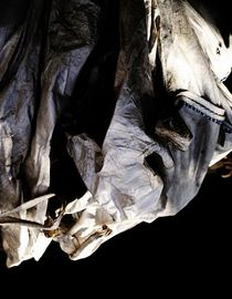 hanging horse von fotokunst66