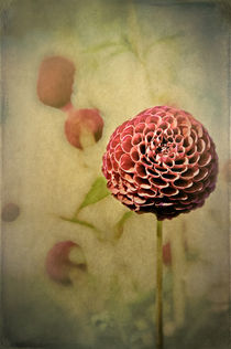 Perennial Gardens - Fall #01 by loriental-photography