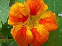 Full Bloom von Jenny Unger