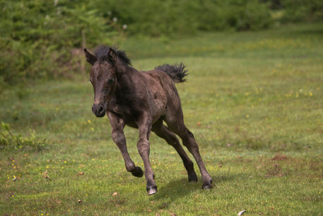 2013-england-new-forest-filly-2w-32